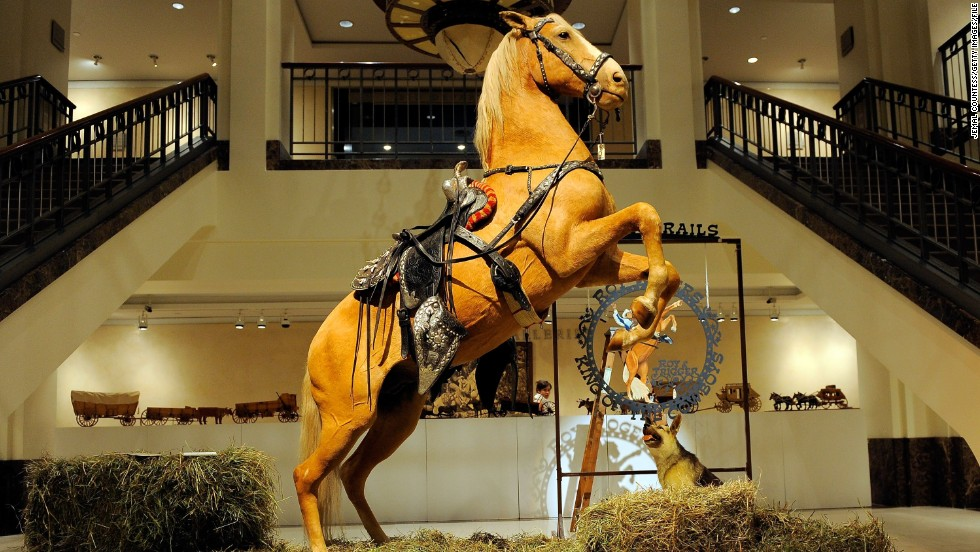 The Art Of Living Forever Equine Taxidermy Cnn