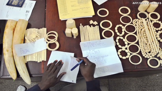 Ivory demand fuels elephant poaching