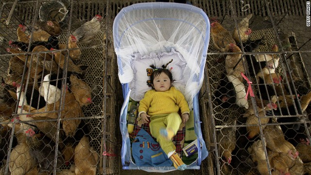 A vendor's child is placed between poultry cages in Wuhan, China, in this file picture.