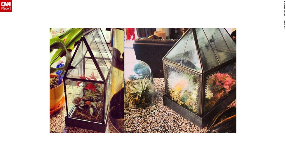 "Creating a terrarium can be a very comforting art form for some. Tracey Martin of Arlington, Texas, says her family inspires her creations, including <a href=""http://ireport.cnn.com/docs/DOC-959894"">small greenhouses</a>. ""My grandmother always has a lot of plants around her home, so when I moved to Arlington to go to school, I thought it would be nice to have some too,"" she said."