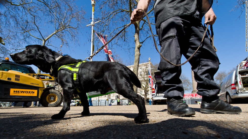 A handler works with an explosive-detecting dog on The Mall in central London on April 20, 2013, on the eve of the London Marathon. London's Metropolitan Police is putting in place hundreds more officers along the route compared with last year and search dogs to reinforce security, in a bid to reassure the 36,000 runners and tens of thousands of spectators.