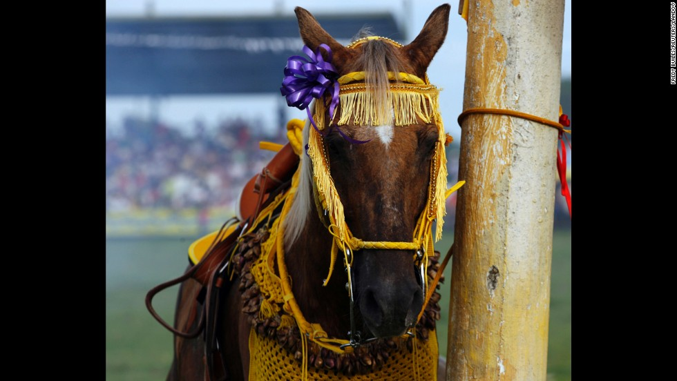 A horse is pictured during a traditional folk festival in San Martin in the province of Meta in November 2012. The annual event has at least 272 years of history and commemorates the native people's struggle for freedom against Spanish colonization.