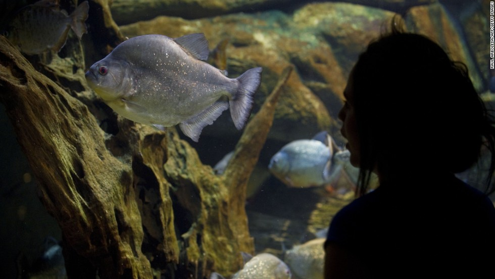 "A woman visits the aquarium of Explora Park in Medellin, Colombia, in March 2013. In 2012, Medellin competed with cities including New York and Tel Aviv, to win the title of ""Innovative City of the Year"" from the Urban Land Institute in partnership with The Wall Street Journal and Citigroup. The city's modern transportation system, including gondolas that shuttle residents from steep mountainside neighborhoods to the city below, was cited as a key factor."