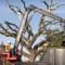 03 auburn oaks