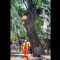 17 auburn oaks