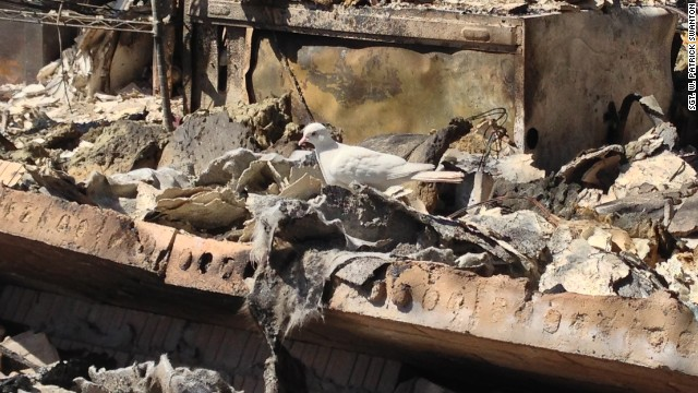 A white dove sits amid the ruins of a home destroyed by the April 17 blast at the West Fertilizer Co. in West, Texas.