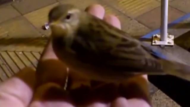orig jtb distraction man has bird friend_00003117.jpg