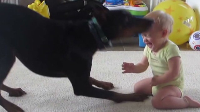 orig jtb distraction doberman plays with baby_00003325.jpg