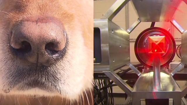 tsr pkg starr bombs dogs vs technology_00002504.jpg