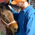 racehorse jrf 1