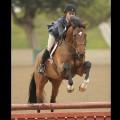 racehorse tca 1