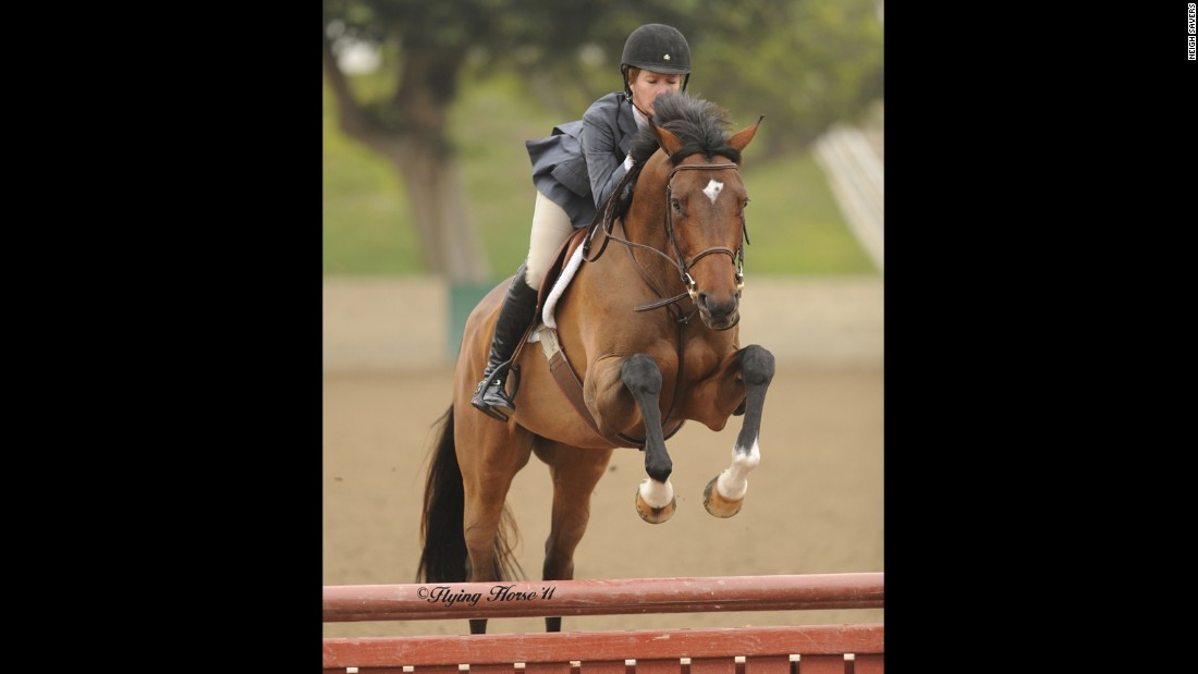 """Ozzie, formerly Warning Zone, was retired from racing after an injury ended his career and brought to<a href=""""http://www.neighsavers.com/"""" target=""""_blank""""> Neigh Savers</a> for rehab. He was adopted by the resident trainer and is now competing in hunter classes. Karin Wagner, the executive director, said that Ozzie's success story was made possible by funding from<a href=""""http://www.tca.org/"""" target=""""_blank""""> TCA</a>."""