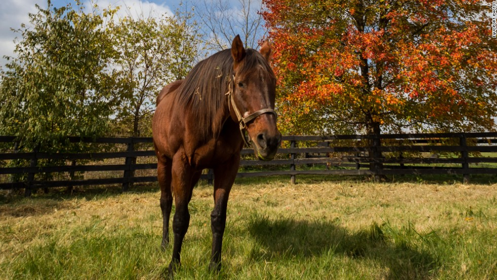 Considered one of the fastest runners of his generation, Ogygian is also known for his breeding. As a stallion, he sired 23 stakes winners. Old Friends raised the money to bring him back to the United States after his breeding career in Japan.