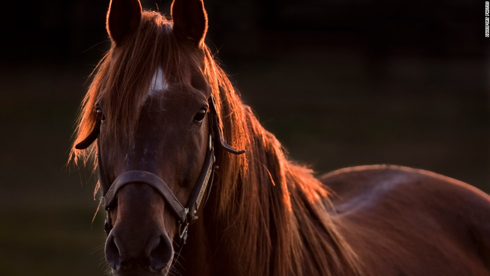 Creator was owned by Sheikh Mohammed bin Rashid al-Maktoum, the ruler of Dubai and overseer of the world-renowned Godolphin Stables. He had a successful career and was retrieved from Japan in 2004 by Old Friends.