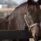 racehorse sarava