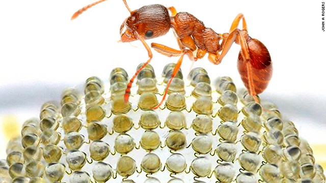 A fire ant is shown on a prototype of a new digital camera modeled after the insect's domed, multilensed eyes.