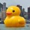 rubber duck in hong kong 1