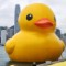 rubber duck in hong kong 6