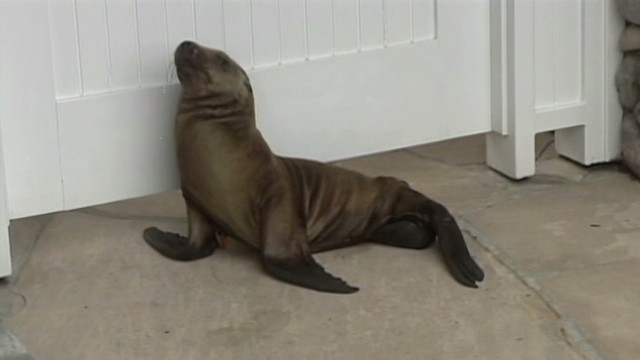 dnt sea lion lost in neighborhood_00002111.jpg