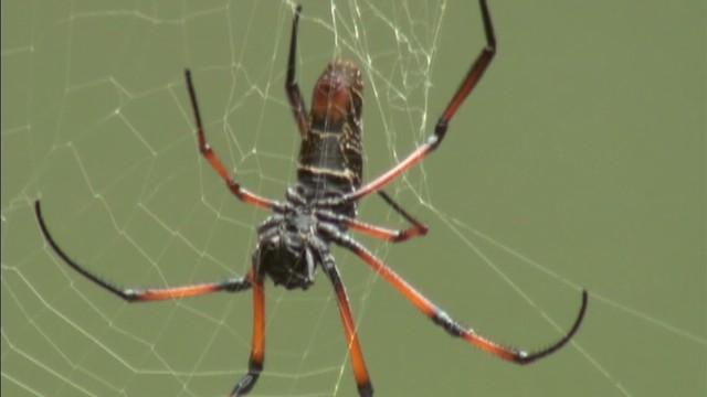 tsr pkg moos christie whacks spider_00000201.jpg