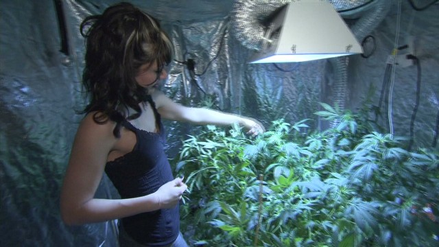 Colorado pot gets homemaking boom