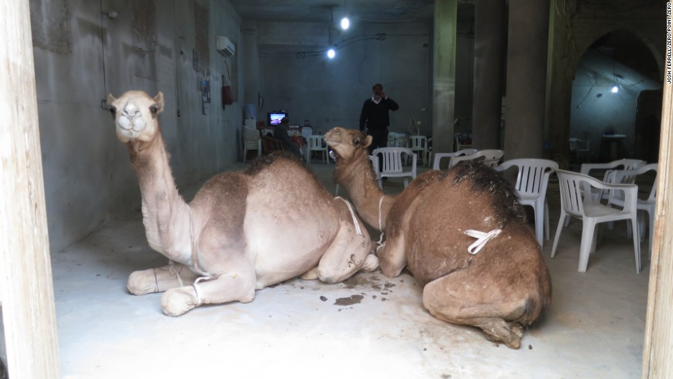 Camels hang out in Old Town, Tripoli.