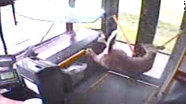 dnt deer crashes onto bus_00001823.jpg
