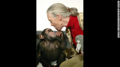 British primatologist Jane Goodall, the world's famous authority on chimpanzees, is kissed by Pola, a young chimpanzee, in Budapest' Zoo December 2004.