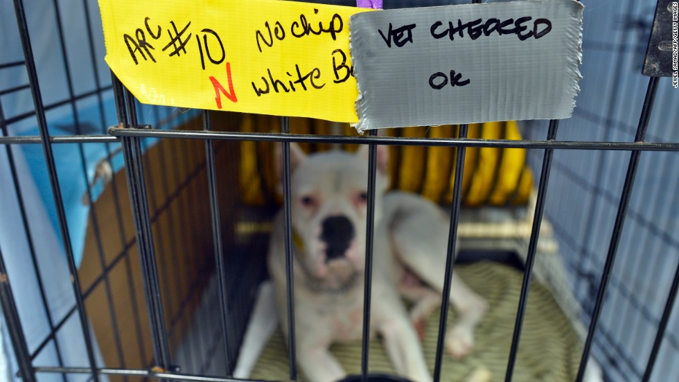 Notes written by the vet are left on the cage of a dog while he rests at an animal shelter on May 23.