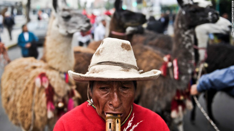 A man plays a traditional quena flute as he parades with llamas and alpacas to promote a local fair in Lima.