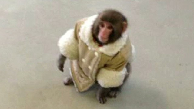 What happened to that IKEA monkey?