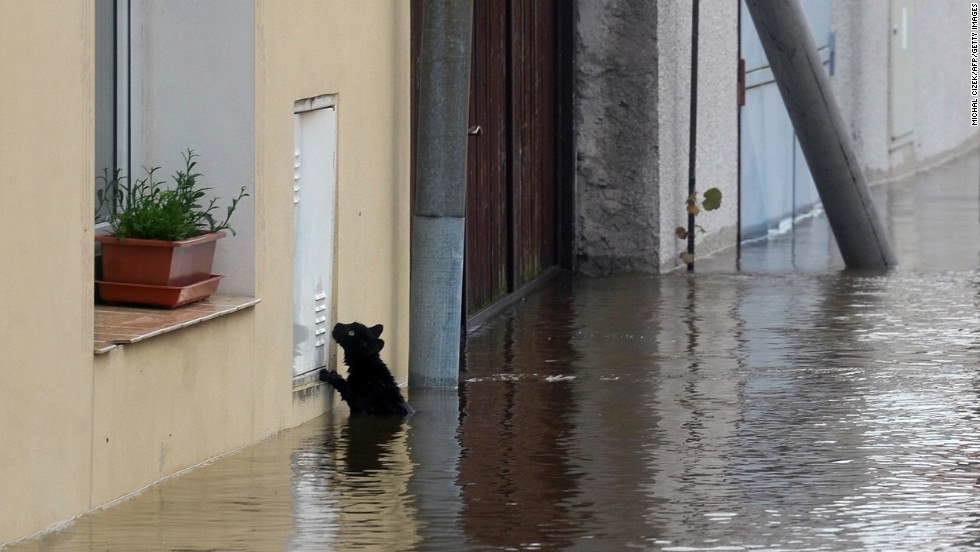 A cat seeks dry ground after flooding from the Vltava River in Kly, Czech Republic, on June 4.