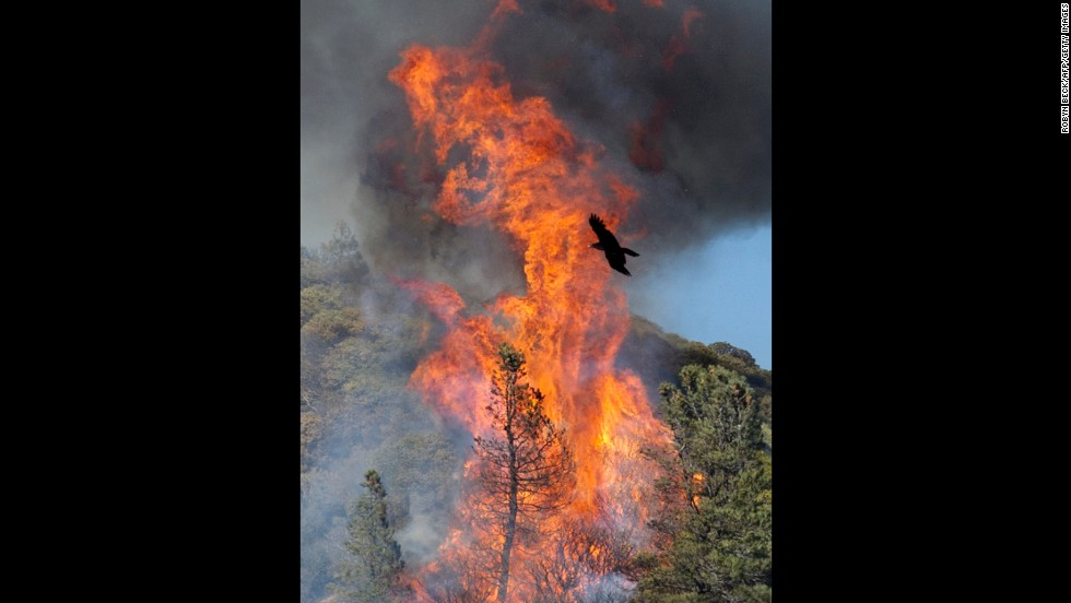 A raven flies in front of a flareup that broke through a containment line on June 3.