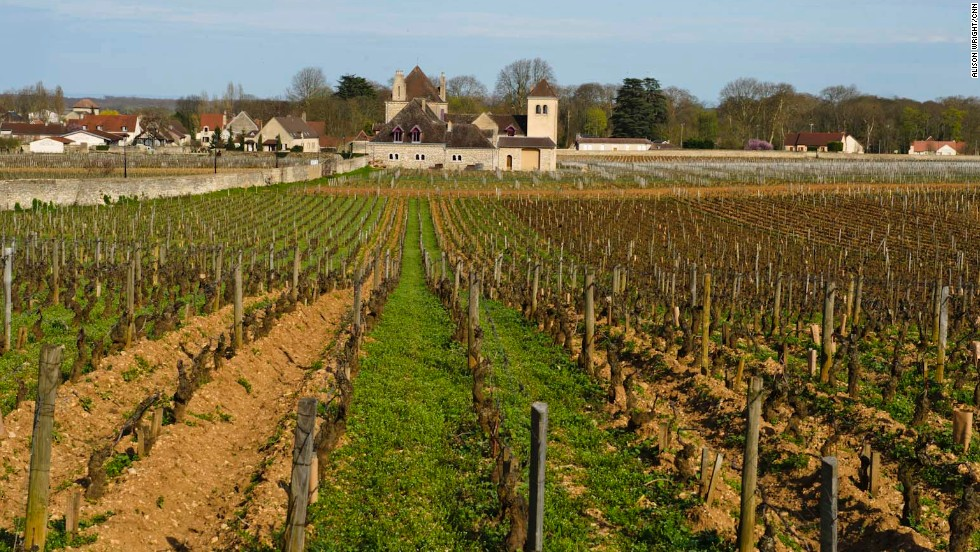 Day excursions on the canal barge cruise include stops at vineyards for wine tasting, wine tasting and then more wine tasting. In this photo: the Grands Vins de Bourgone vineyards in Burgundy.