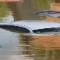 11 europe flood 0605