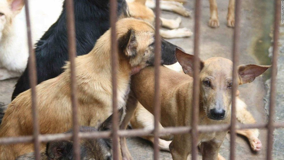 The shelter on the Thai border with Laos is home to hundreds of animals rescued from the cruel and inhumane dog smuggling trade.
