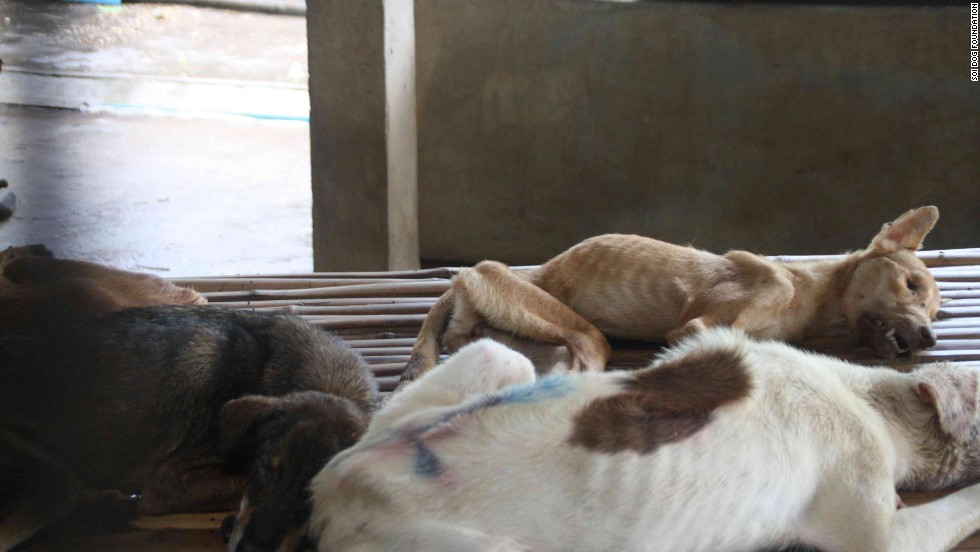 Sadly many of the rescued animals are found in an extremely poor condition and not expected to survive.