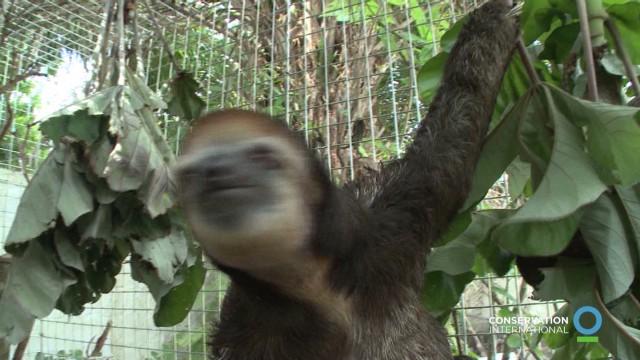 natpkg sloth rescue_00000020.jpg
