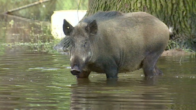 Animal park swamped by flood waters