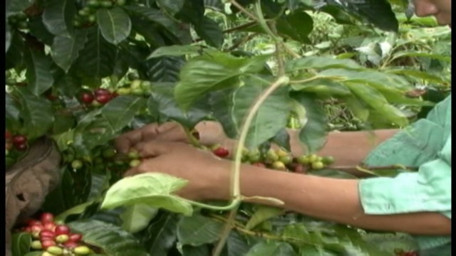 cnnee sandoval honduras world day against child labor_00014702.jpg