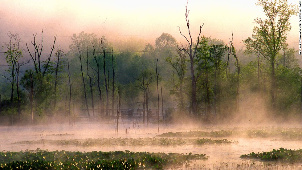 Beaver Marsh was created by beavers among the remains of the Ohio & Erie Canal. Adams also spots snapping turtles, blue herons and snakes in the area.