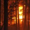 03 colorado fires 0612