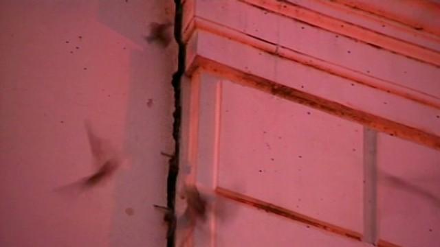 dnt bats infest downtown sacramento_00012010.jpg