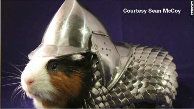 tsr pkg moos armored guinea pig_00020416.jpg