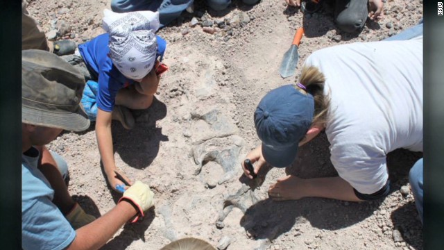 Look, Ma! Family finds dino bones