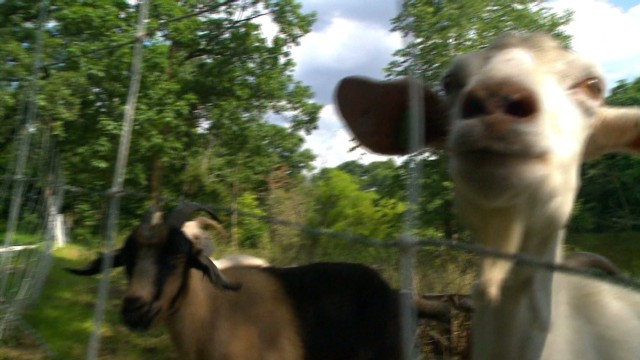 pkg goats on the go_00011211.jpg
