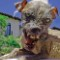 sam, The World's Ugliest Dog