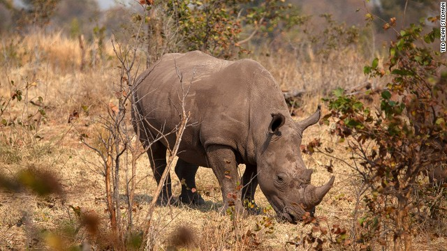 Dallas auction to kill rare black rhino