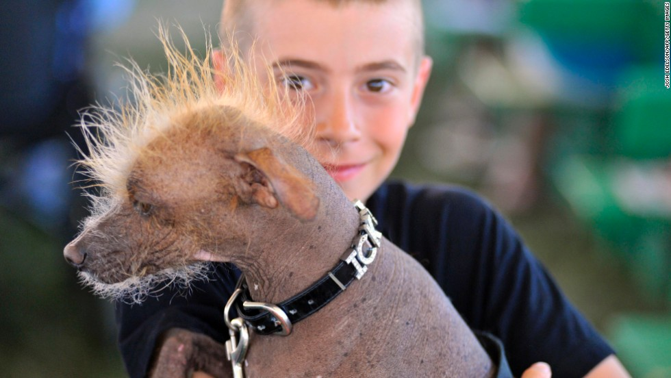 A boy poses with his dog Icky, a Chinese Crested, before the competition.