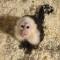 Bieber monkey 2
